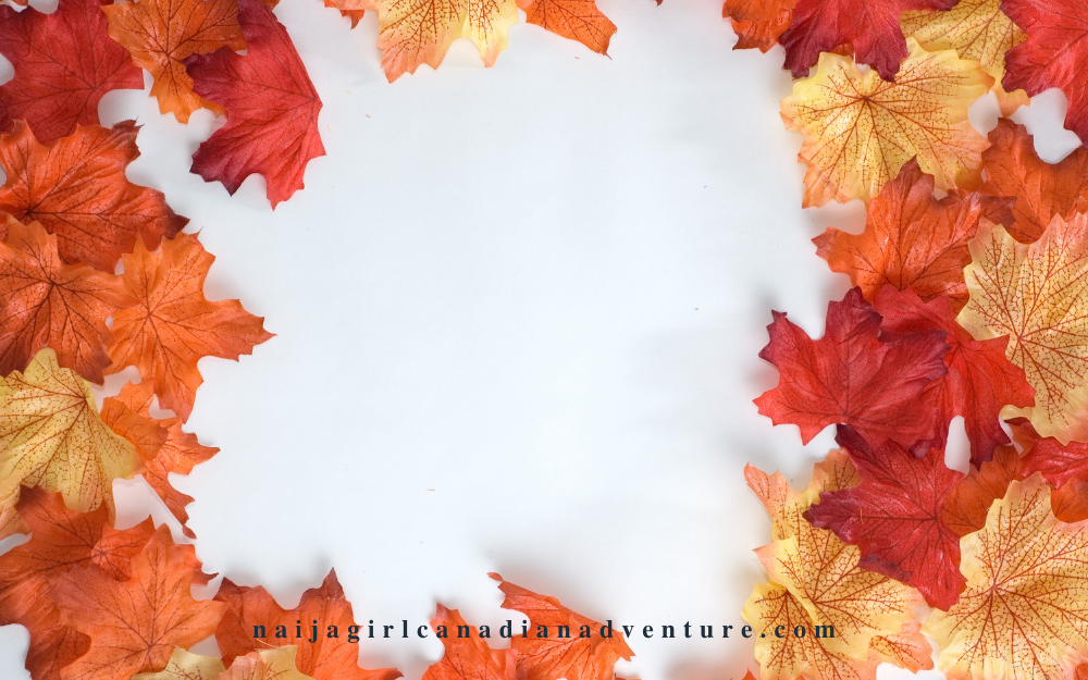 Beautiful Colors of Fall