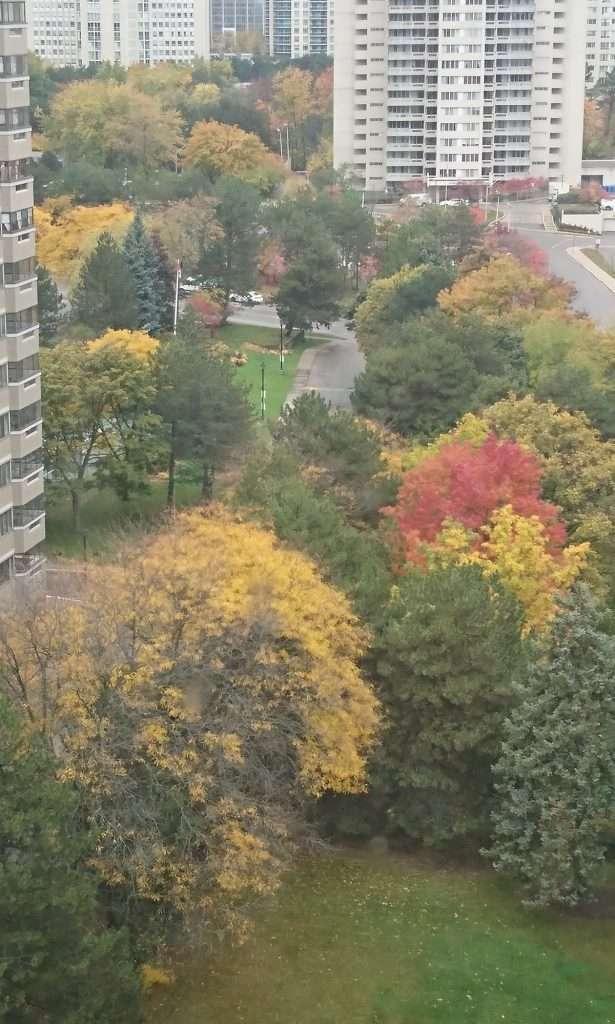 beautiful colors of fall in Canada